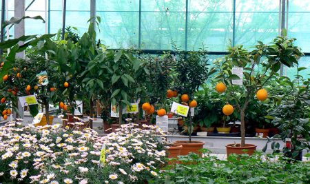 Odborná exkurze žáků zahradnických oborů